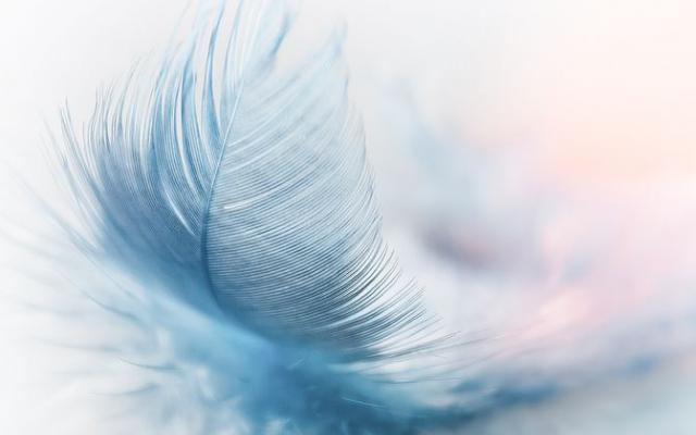 feather-3010848480_w