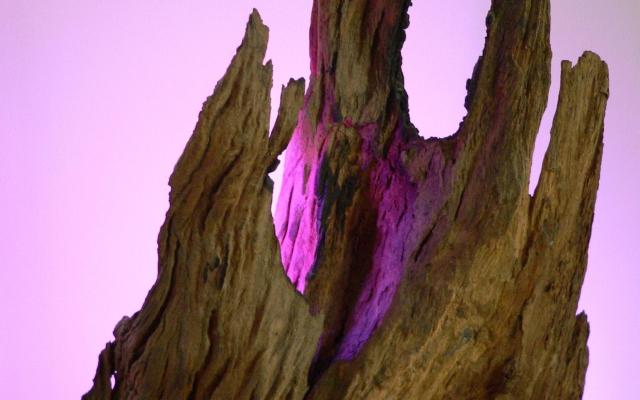 Violetlicht in De evolutie