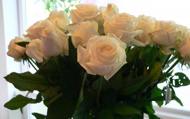 Witte rozen in de meditatie ruimte