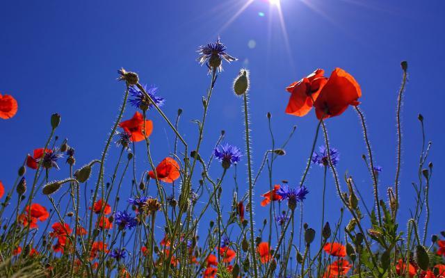 bloemenveld-ilse_w
