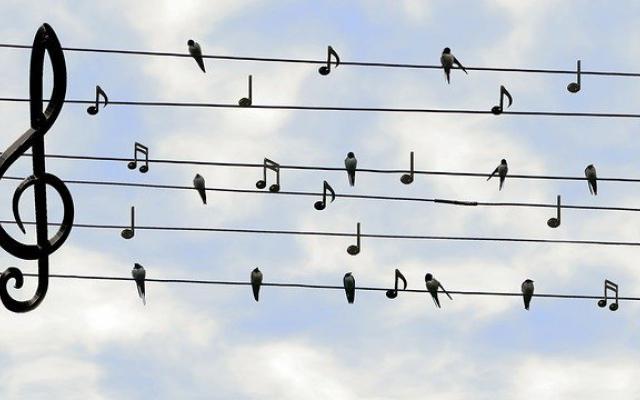birds-2672101_640